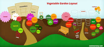 vegetable garden layout roots nursery