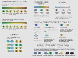 Sphynx Cat Color Chart Eye Colours Sphynx Cat Color Chart Profitseternity Us