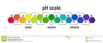 Ph Value Scale Chart Stock Vector Illustration Of Healthy