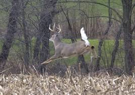 Deer Are Plentiful This Hunting Season Toledo Blade