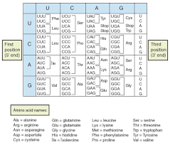 Amino Acid Characteristics Chart Characteristics Of The Genetic Code A Level Biology