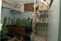 basement grow room design. Take A Little Time To Set Up Your Grow Room So All The Space Is Used Efficiently. Basement Design R