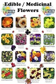 types of garden flowers with pictures flower list with pictures best list of flowers ideas on types of garden flowers