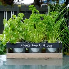 patio herb garden containers patio garden containers container
