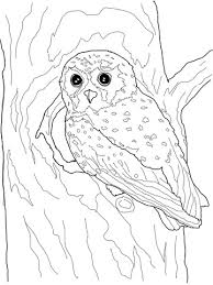 Small Picture Elf Owl coloring page Free Printable Coloring Pages
