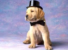 puppy wallpapers freepuppy wallpapers free