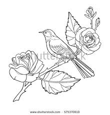 rose and bird coloring book page hand drawn outline contour flowers and vector ilration