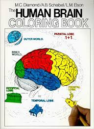Small Picture Awesome Brain Anatomy Coloring Book Contemporary New Printable