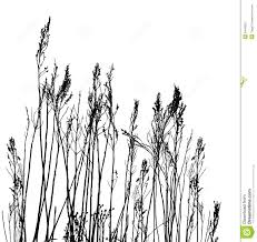 tall grass silhouette. Beautiful Tall Real Grass Silhouette  Vector And Tall Grass Silhouette A