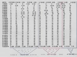 Doberman Pinscher Weight Chart Goldenacresdogs Com
