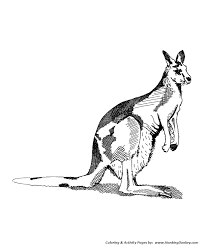 Small Picture Wild Animal Coloring Pages Kangaroo Coloring Page and Kids
