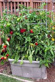 Living Well 7 Secrets For A Successful Container Garden ⋆ Design MomContainer Garden Plans Tomatoes