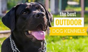 best outdoor dog kennels