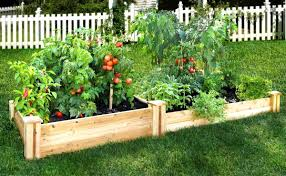 Small Picture Raised Vegetable Garden Design Layout The Garden Inspirations