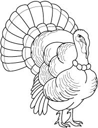 coloring pages of turkeys page turkey free feathers already colored color