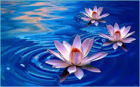 Lotus Flowers Wallpapers - Wallpaper ...