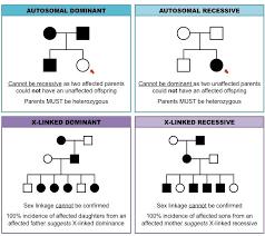 Muscular Dystrophy Pedigree Chart Answers Pedigree Charts Inheritance Cheat Sheet Biology Lessons