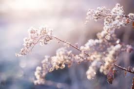 Come dipingere fiori & alberi la pittura è una presa di corrente artistica, che chiunque può godere. Alberi E Cambiamenti Climatici Focus It