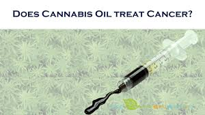 Image result for cannabis oil treatments of cancer