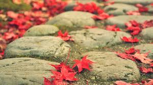 Leaves HD 1080p Wallpapers