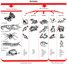 Animal Classification Chart Invertebrates Animal Classification Nature In Your Own Backyard Animal
