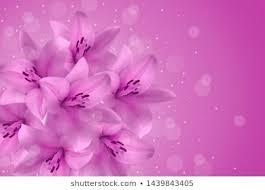 Purple Flowers Backgrounds Purple Flower Background Images Stock Photos Vectors