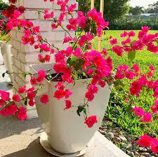 top 20 plants that love living in pots
