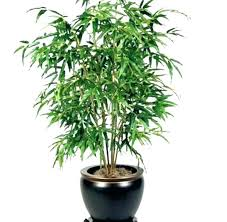 office plants no light. Inside House Plants Indoor No Light Office Best Low Trees Amazing Nyc Delivery N