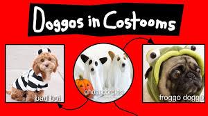 Doggos In Costooms