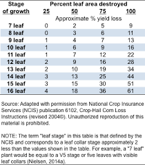 Soybean Hail Damage Chart Recovery From Hail Damage To Young Corn Corny News Network