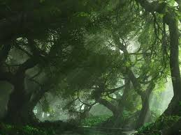 High quality 16001200 desktop backgrounds pc 3d graphics forest
