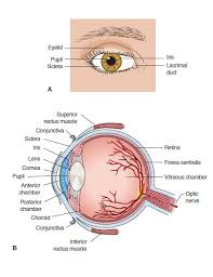 right eye diagram right database wiring diagram images 10804199