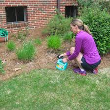 how to kill weeds in garden. spraying weeds in garden bed how to kill s