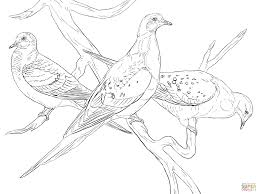 Small Picture Passenger Pigeons coloring page Free Printable Coloring Pages