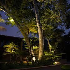 landscape lighting trees. twin trees landscape lighting