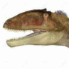 carcharodontosaurus size carcharodontosaurus head carcharodontosaurus was a carnivorous
