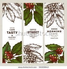coffee plant illustration vector. Exellent Coffee Coffee Tree Illustration Engraved Style Vintage Coffee  Banner Collection Vector Illustration Intended Plant Illustration E
