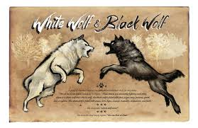 black wolf and white wolf love. Interesting White White Wolf Black  Christopher Panza On And Love I