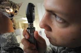 """Résultat de recherche d'images pour """"cat care php-thumbnail"""""""