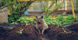 keep cats out of your flower beds