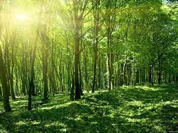 Sunny spring forest-Windows Theme ...