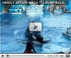 dawn brancheau attack footage. Interesting Dawn Killer Whale Attack Dawn Brancheau  Photo15 With Dawn Brancheau Attack Footage O