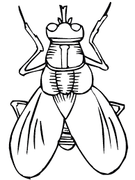 Small Picture Insect Coloring Page Miakenasnet