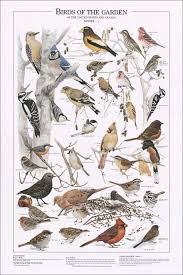 Birds Of The Garden Winter I Identification Chart Bird