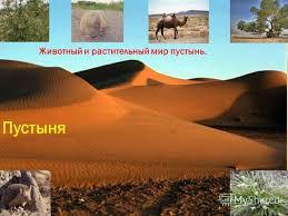 Презентация на тему Пустыня Животный и растительный мир пустынь  1 Пустыня Животный и растительный мир пустынь