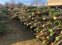 <b>Christmas trees</b> are <b>hot</b>, <b>hot</b>, <b>hot</b> in 2020