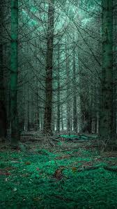 wallpaper nature mysterious forest