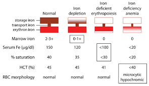 Blood Count Chart For Anemia Development Of Iron Deficiency Anemia Eclinpath