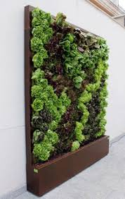Lettuce wall - vertical AND edible, love it! Aww man I want one of