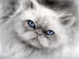 black cats with blue eyes for sale. Perfect Sale Persian Cat Painting  With Blue Eyes By Svetlana Novikova To Black Cats For Sale O